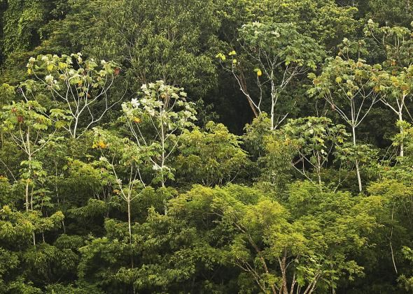 What Happens When Trees Disappear People Die Rainforest Plants