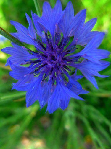 Blue Flower 13x17 In. Print $20.00