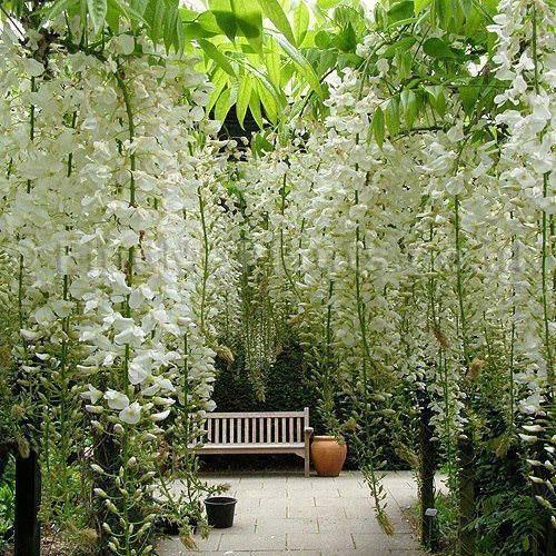 Terraza Con Flores Blancas Colgantes Jardines Bonitos Jardines Jardines Colgantes