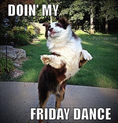 bcc395904deaa9fa42b54ff4b7668ebc dog meme, friday dance, tgif friday memes pinterest friday