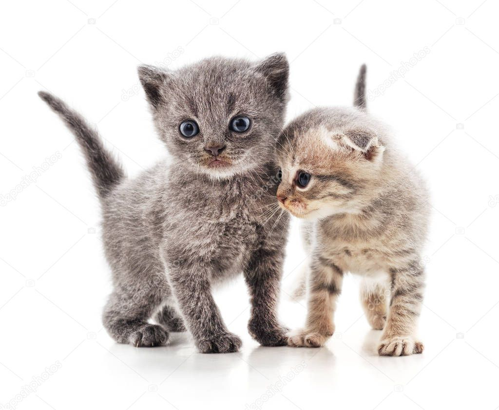 Two Beautiful Cats Stock Photo Ad Cats Beautiful Photo Stock Ad Beautiful Cats Cats Cat S