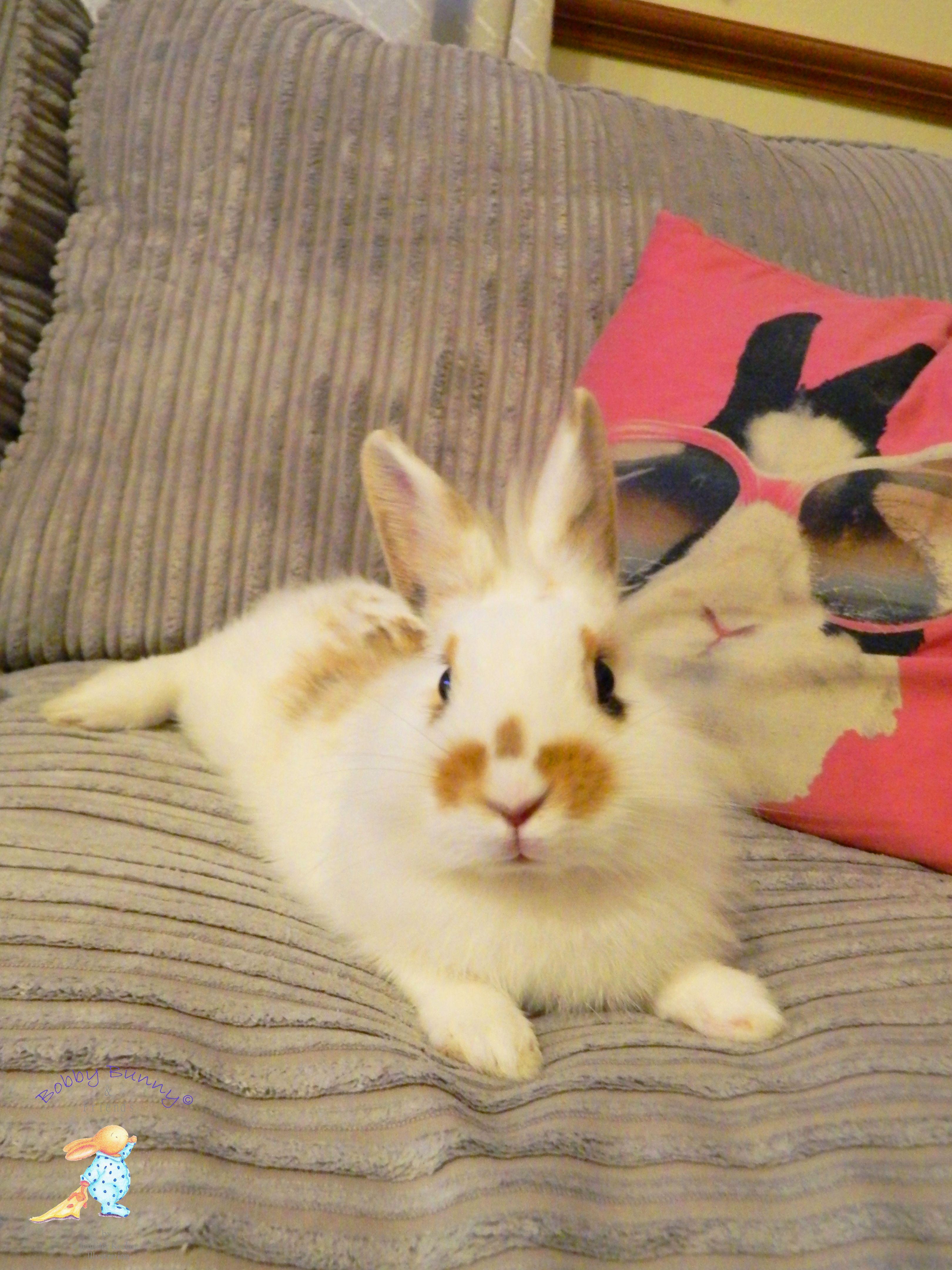 Pin by Yijun Liu on Bunny! Cute bunny pictures, Pet