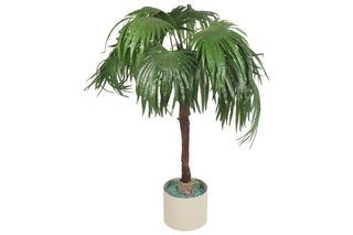 How to Care for a Majesty Palm | eHow
