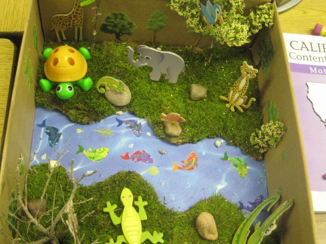 Science pond ecosystem diorama school pinterest for Garden pool ecosystem