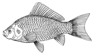999 Fish Clipart Black And White Free Download Cloud Clipart Fish Drawings Fish Drawing Images Fish Clipart Black And White