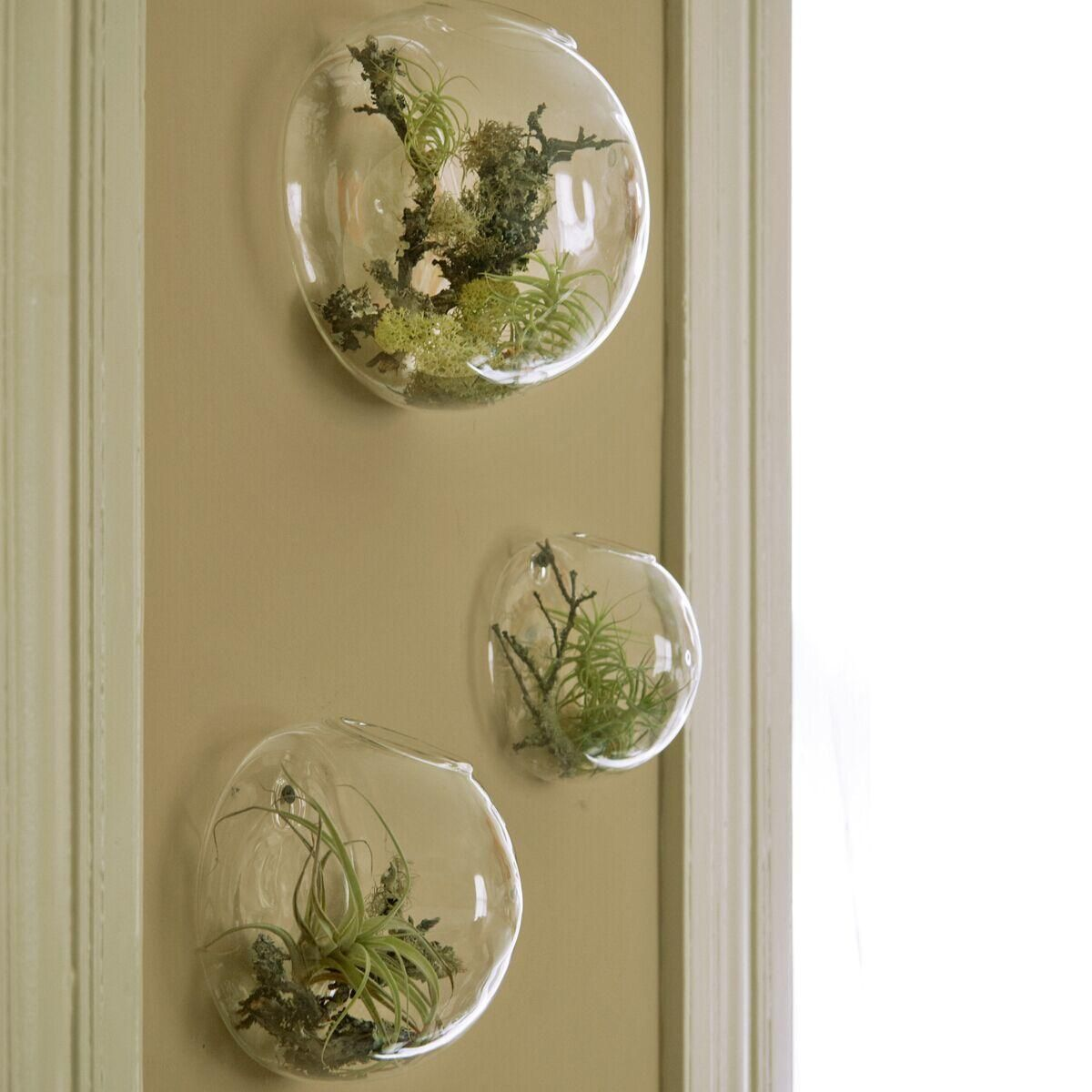 3pcs set air plant wall glass terrarium wall bubble for Air plant holder ideas