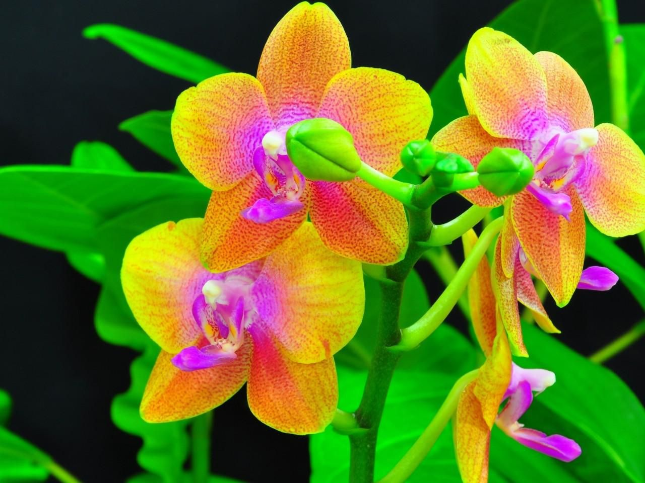 Exotic orchids ..