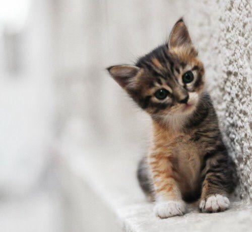 We Heart It 経由の画像 https://weheartit.com/entry/174090398 #bonito #cat #gatito #pared
