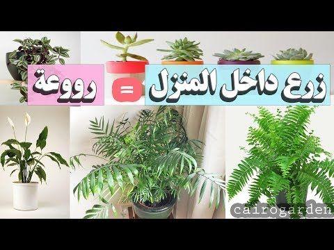 طريقة زراعة بذور الليمون من ثمرة ليمون عادية موجودة بالثلاجة Youtube Plants Home Decor Decor