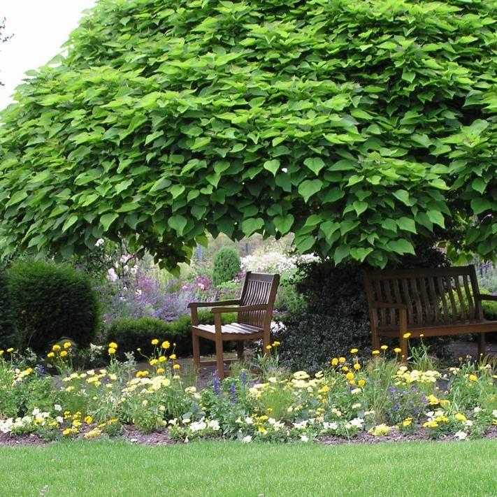 trompetenbaum terrasse garden outdoor plants und plants. Black Bedroom Furniture Sets. Home Design Ideas