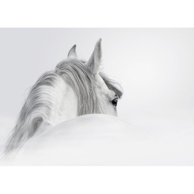 Weißes Pferd Grafik Grafik Druck auf Glas
