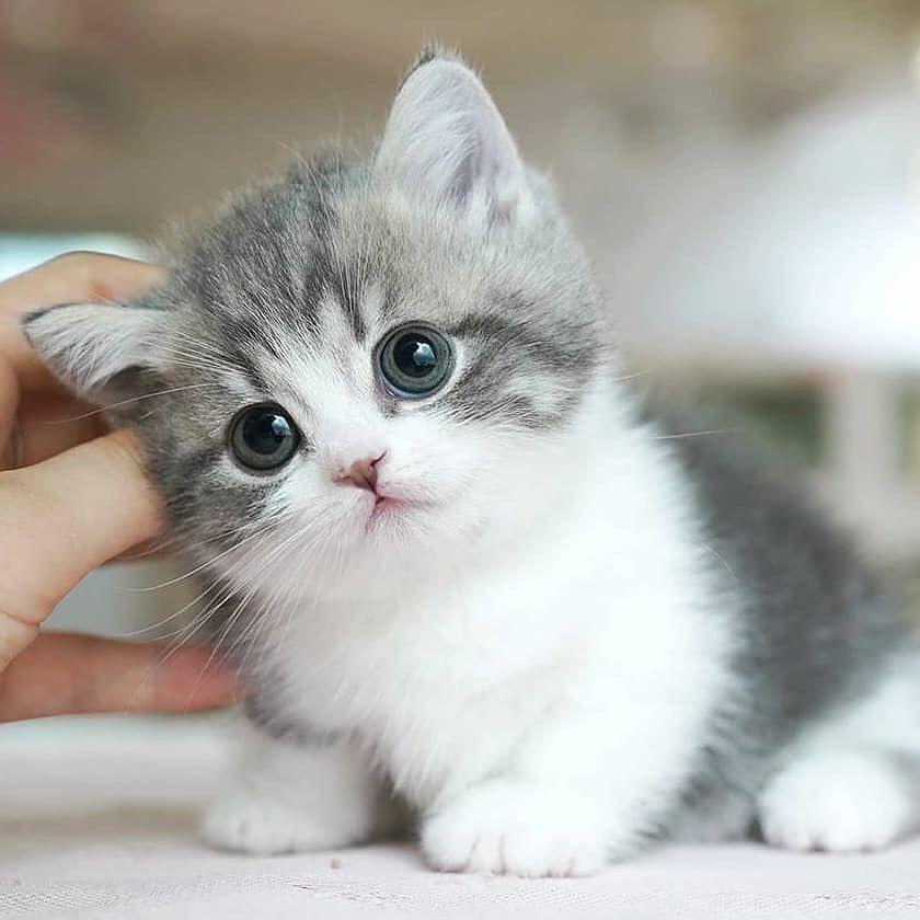 Sweetcat Club Posted On Their Instagram Profile Soo Adorable Double Tap Follo Sevimli Hayvan Yavrulari Sevimli Kedi Yavrulari Sevimli Kediler