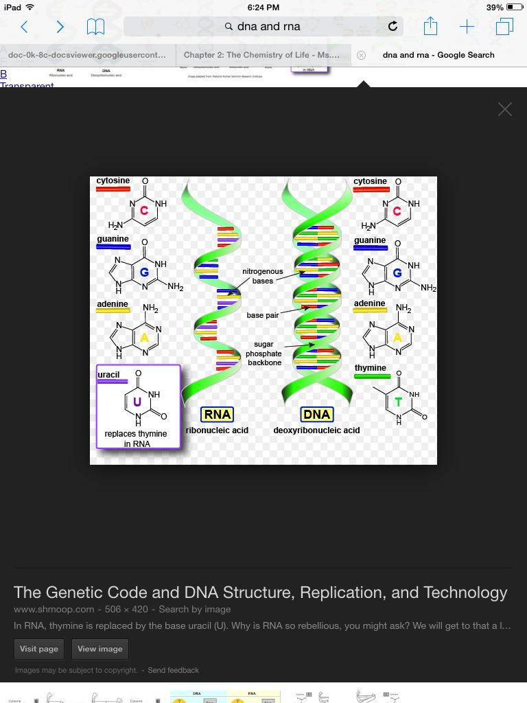 Macromolecules Dna And Rna Are Examples Of Nucleic Acid In Everyday
