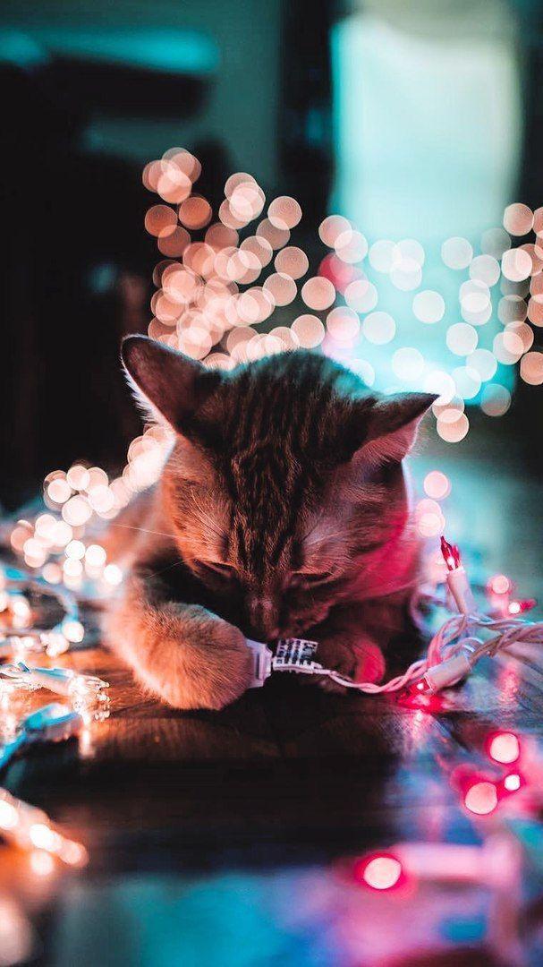 Pin Oleh Vio Alexandra Di Pet S Hewan Kucing Cantik Dan Binatang