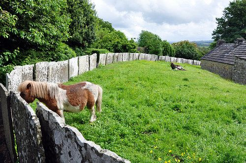 Bunratty Folk Park. This miniature pony let me scratch behind his ears.