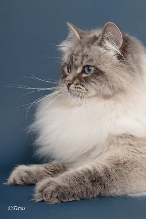 Recommended Canned Cat Foods Hypoallergenic Cats Siberian Kittens Hypoallergenic Cats Kittens