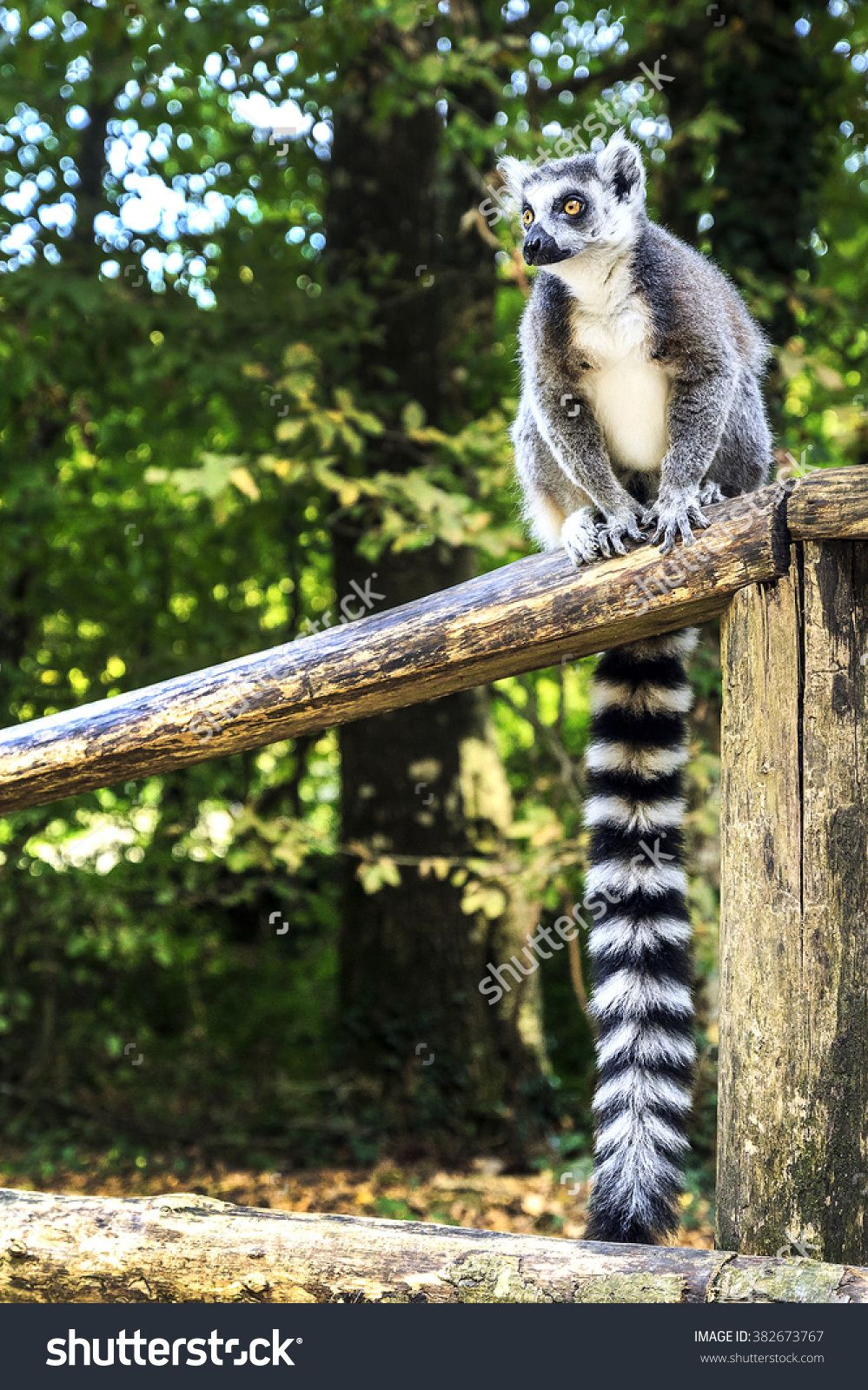 Ring Tailed Lemur Sitting In The Park Cute Animal Pictures Lemur Animals