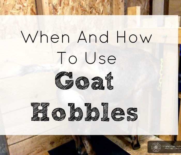 What are Goat Hobbles and How to use them