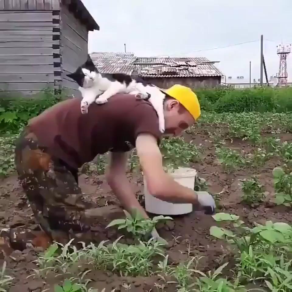 Photo of Work harder human slave.
