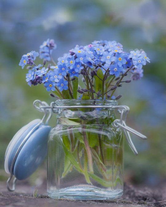 Pin Von Christa Helling Auf Momente Frühlingsblumen