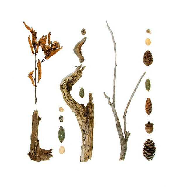 bits of nature