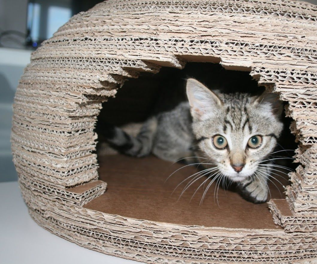 With the help of my cat Yoko, here is how to create a wonderfull cardboard cat house.I'm sure your cats will enjoy it very much as mine.