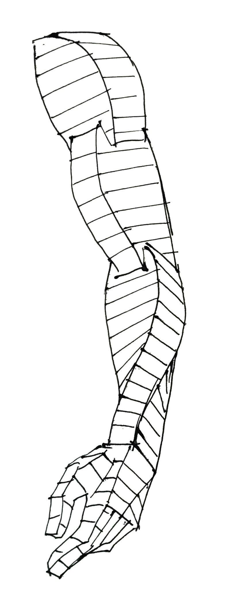 Ejemplo de como a ser un brazo   anatomia   Pinterest   Brazos ...