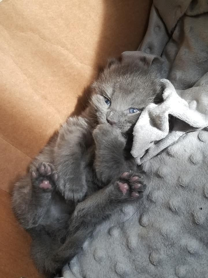 3 Twitter Baby Cats Cat Obsession Kittens