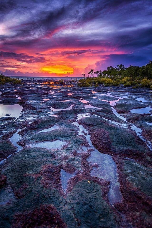 Nightcliff Mangrove, Darwin, NT