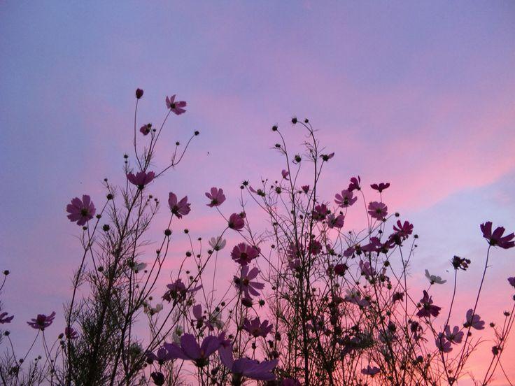 Wintermädchen - Easy flowers