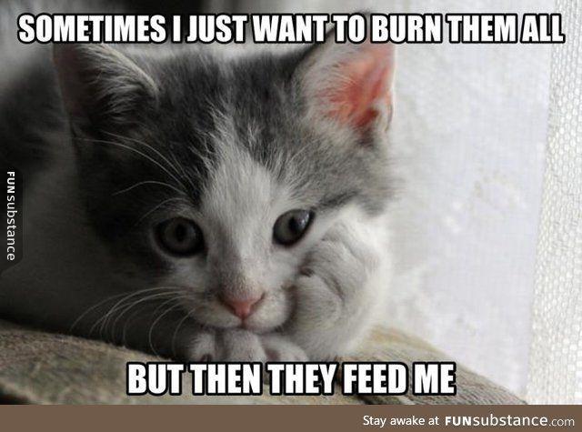 Contemplative kitten