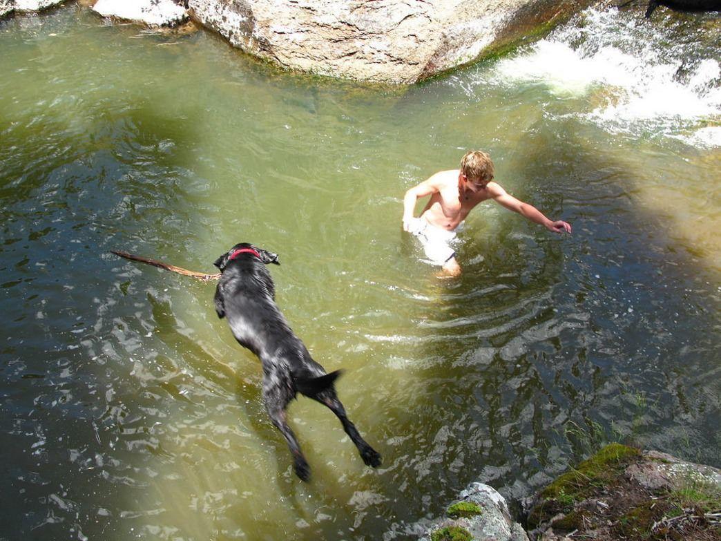 Best dog friendly hikes in colorado springs colorado