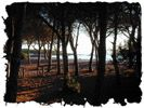 #Budoni #sardinia #Agrustos #beach