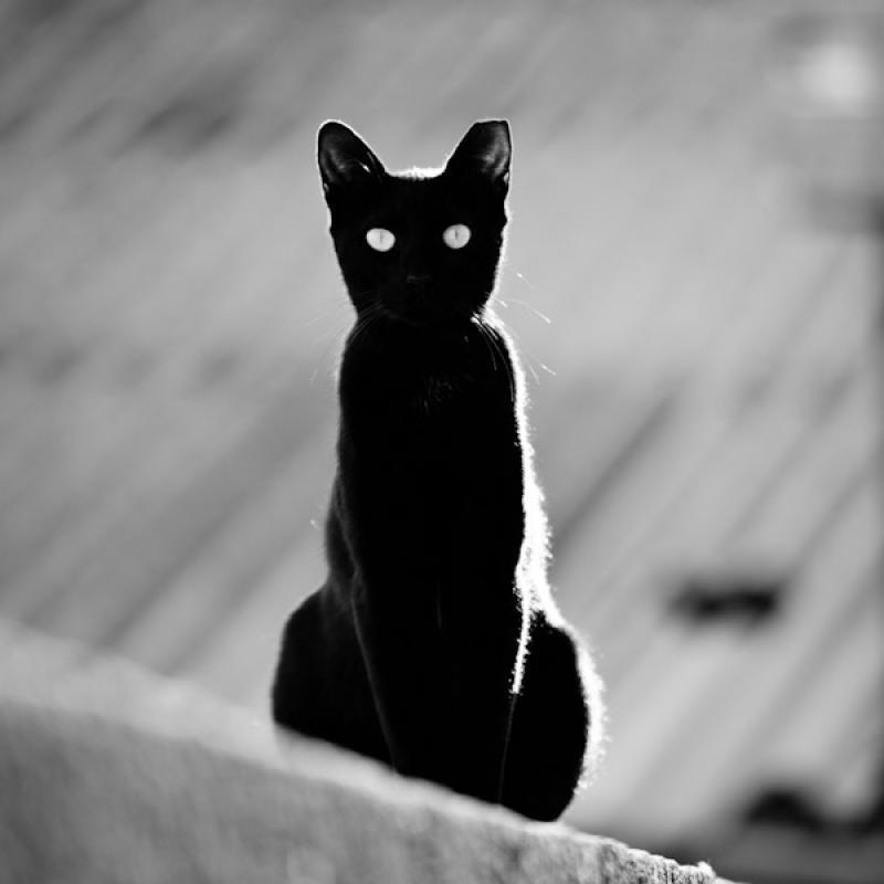 Mythes Et Legendes De Franche Comte Chat Noir Et Blanc Photo Chat Chat Noir