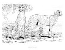 Free Anatomy Coloring Pages Family Coloring Pages Animal Coloring Pages Farm Animal Coloring Pages