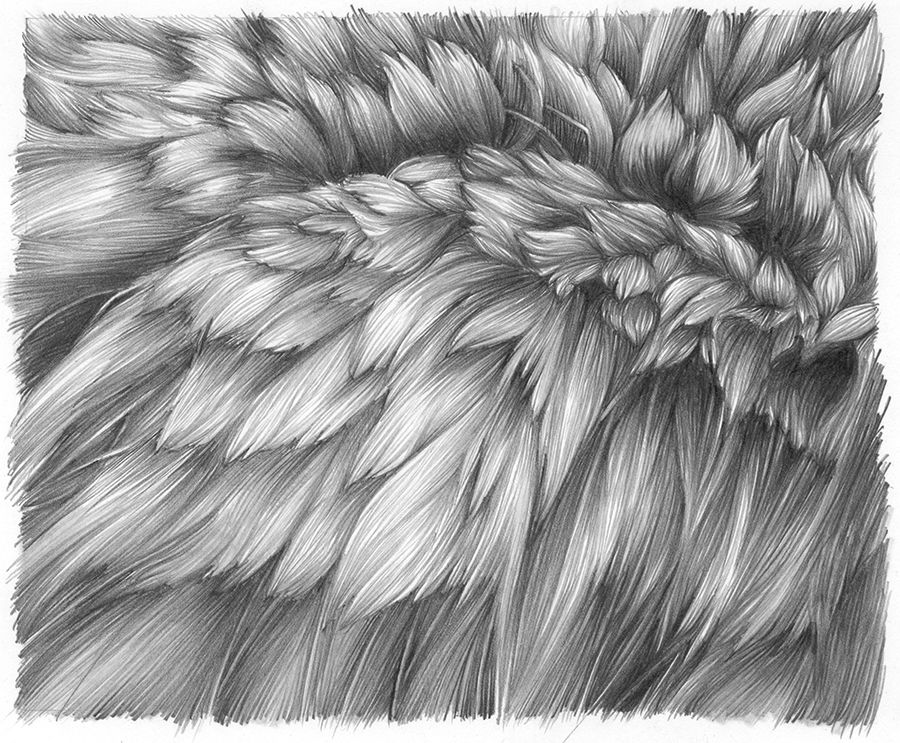 drawing hair How to draw hair, How to draw fur, Animal