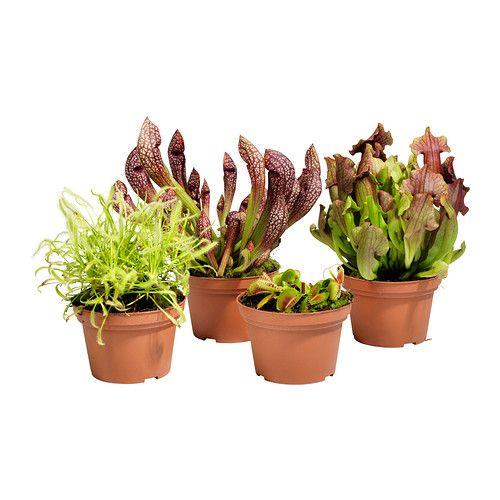 gr nskan plante en pot ikea stuff deco pinterest. Black Bedroom Furniture Sets. Home Design Ideas
