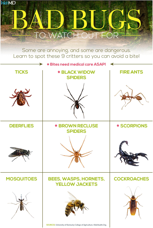 Identifying Bugs And Bug Bites Poisonous Spiders Poisonous Bugs Identifying Bug Bites