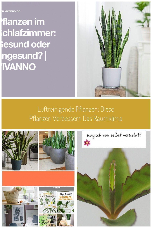 Pflanzen Im Schlafzimmer Gesund Oder Ungesund Pflanzenimschlafzimmer Pflanzen Im Schlafzimmer Gesund Oder Ung In 2020 Schlafzimmer Pflanzen Pflanzen Zimmerpflanzen