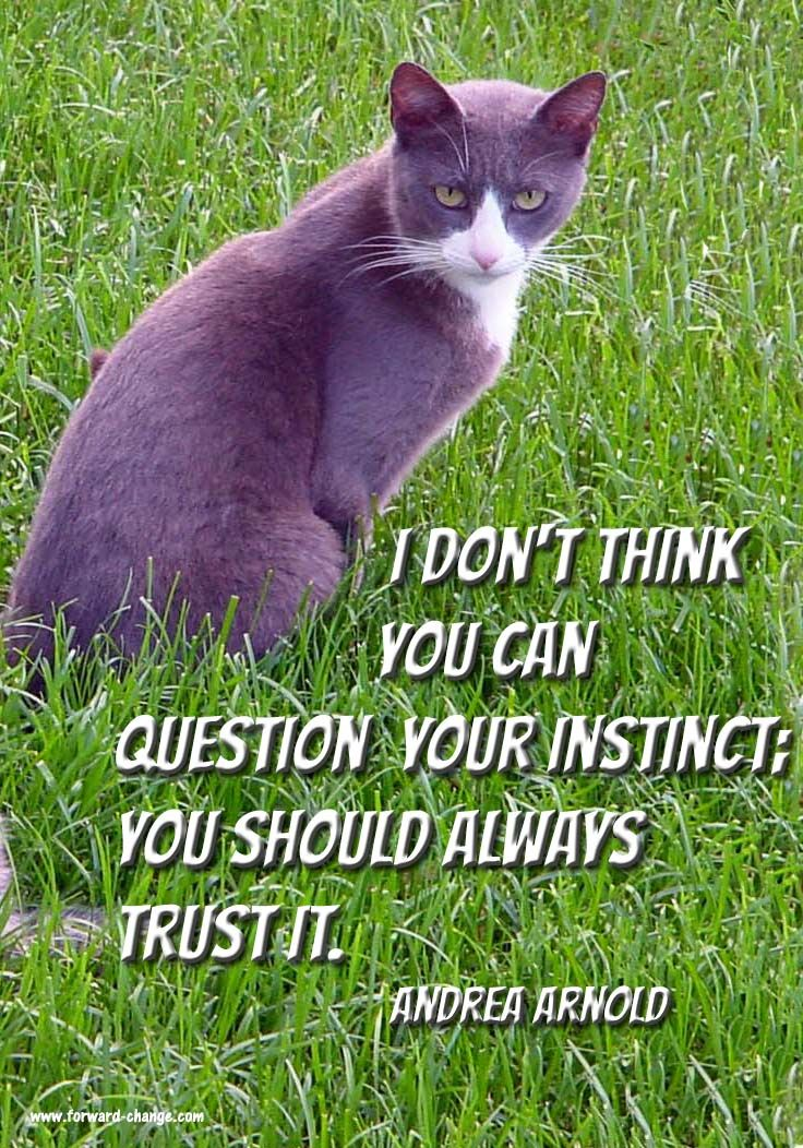 Trust your #intuition. Go here to find out more http://www.forward-change.com/products/121-4i-s-success-strategy-intuition