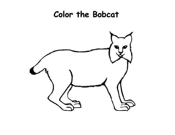 Kids Drawing Bobcat Coloring Pages Best Place To Color Drawing For Kids Coloring Pages Online Coloring For Kids