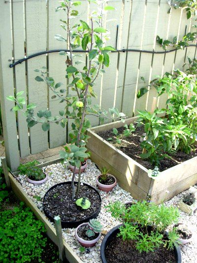 bcd2b360949cab7885d9c0efb7f36369 - What Type Plants Are Suitable For Micro Gardening