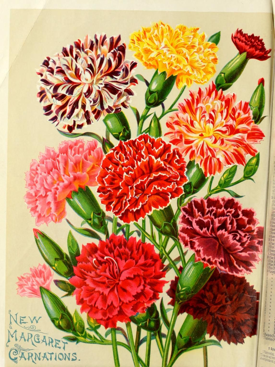 New rare and beautiful flowers vintage seed packets catalogs new rare and beautiful flowers izmirmasajfo