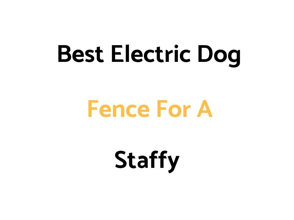 Best Electric Dog Fence For A Staffy Invisible In Ground Above Ground Wireless The Daily Shep In 2020 Dog Fence Pet Containment Systems Invisible Pet Fence