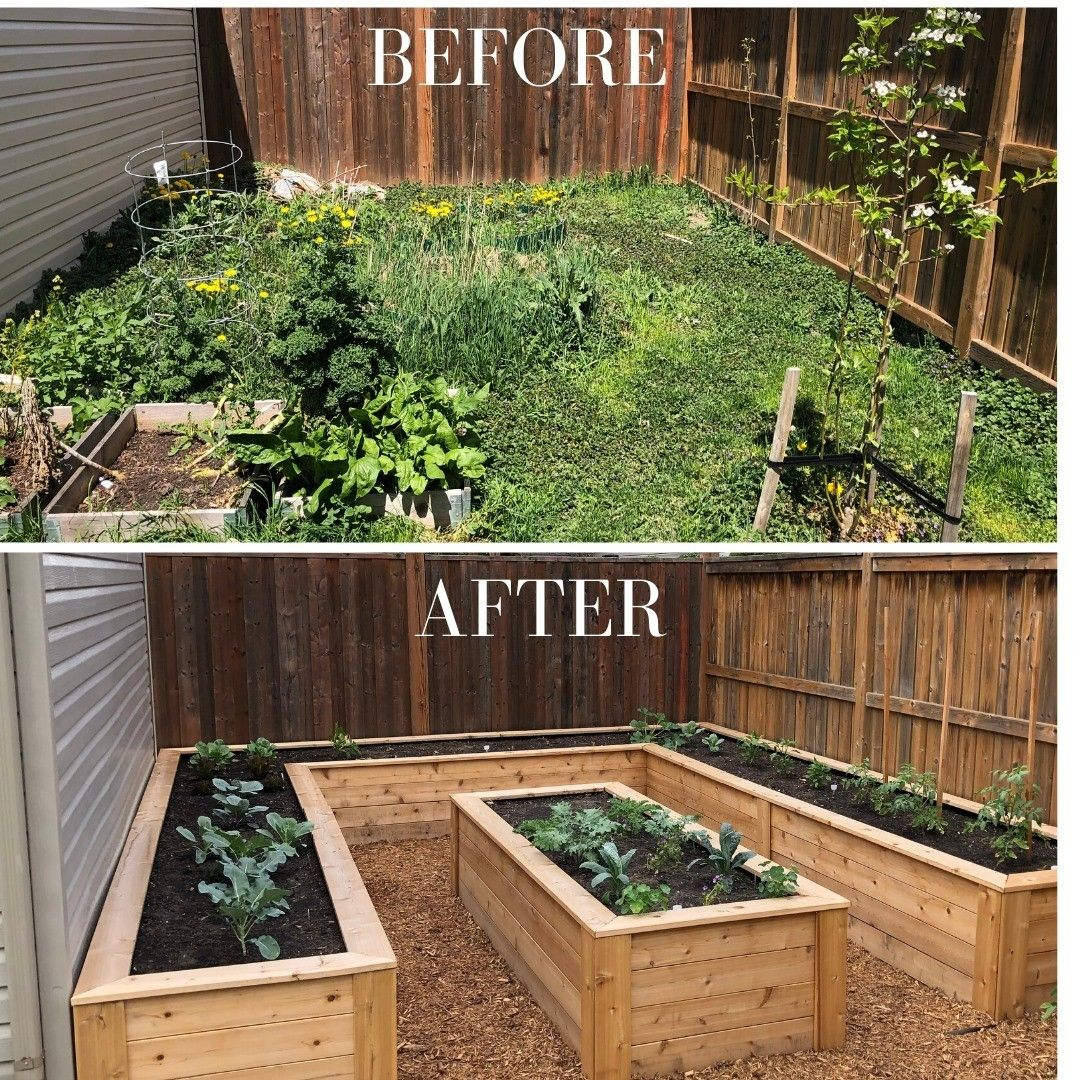 Before And After Raised Gardens Backyard Farming Backyard Landscaping Backyard Vegetable Gardens Backyard garden raised beds