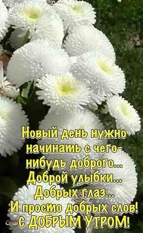 92 Odnoklassniki Utrennie Citaty Dobroe Utro Smeshnye Otkrytki