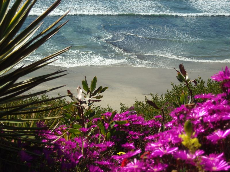Visit The Meditation Gardens At Self Realization Fellowship In Encinitas Ca