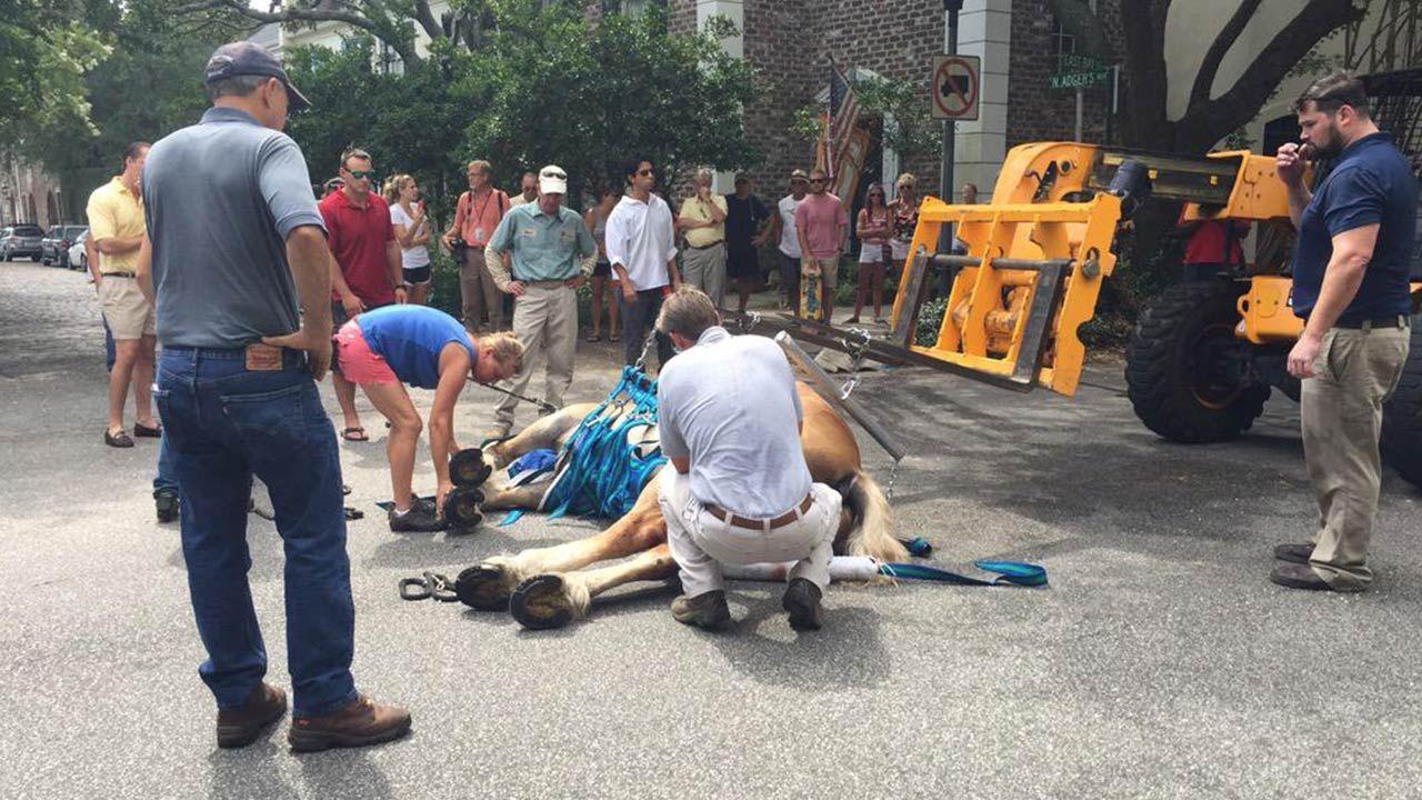 Charleston News, Weather, Sports, Breaking News Animal