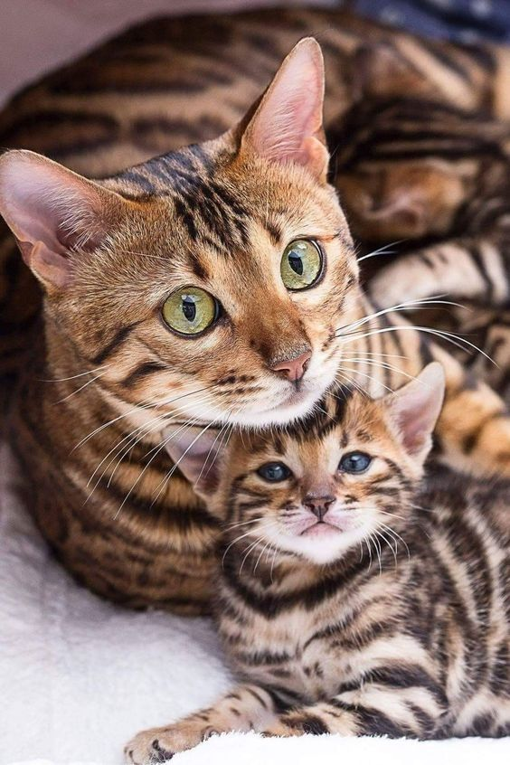 Secrets To Raising A Tame And Outgoing Cat - CatTime