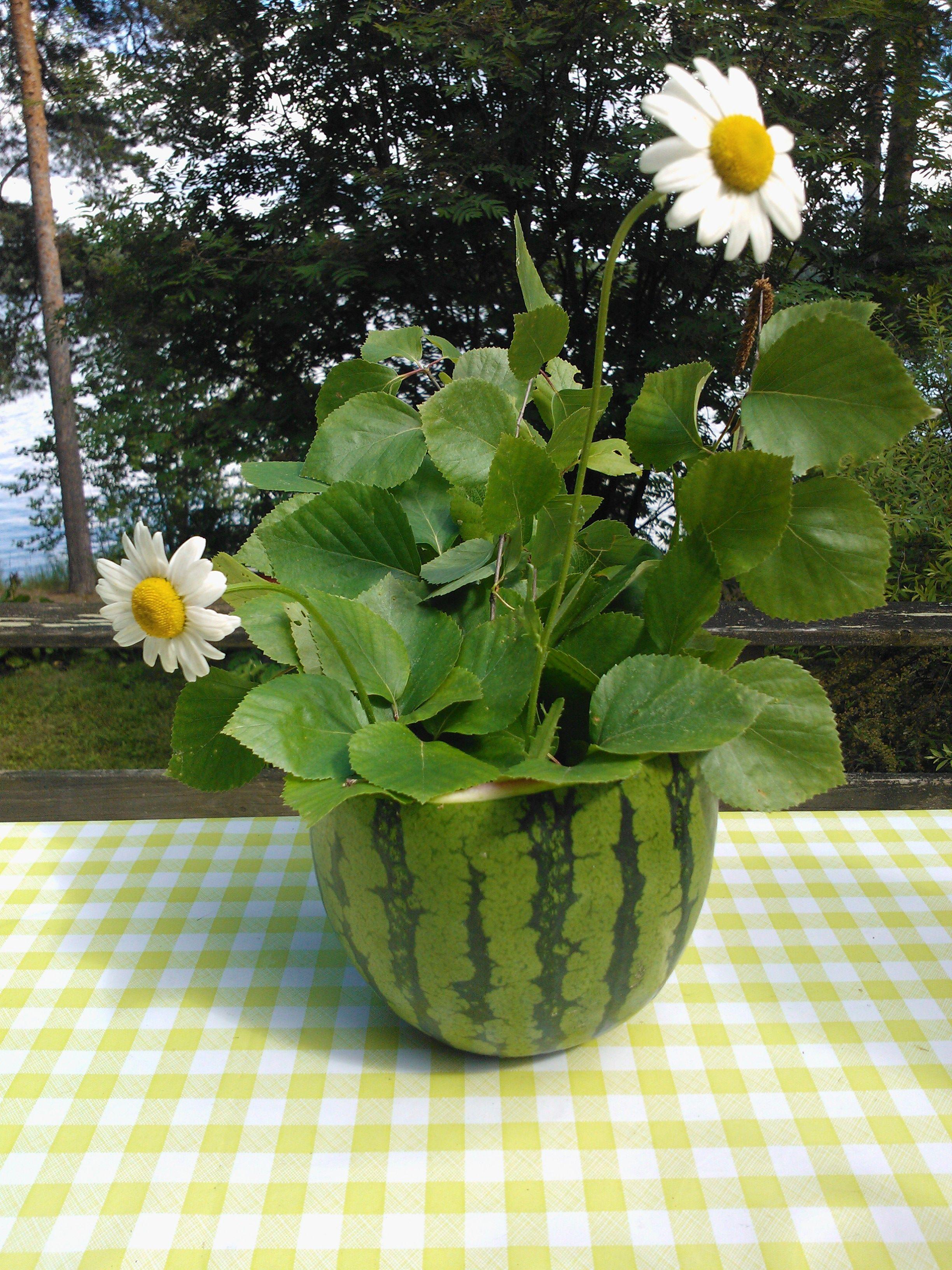 Juhannus vesimeloni - Midsummer watermelon :)